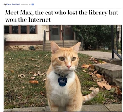 Max the library cat.001